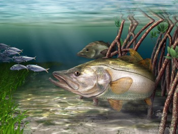 Snook art digital painting from Mark Erickson, marine life artist