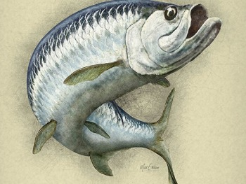 Tarpon artwork sketch fine art