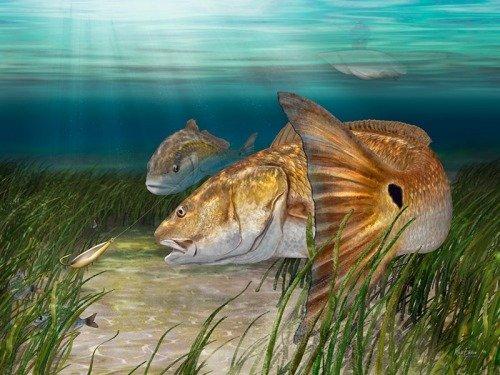 Redfish art prints open edition prints