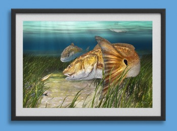 Redfish painting art print in a frame
