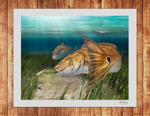 Redfish fine art limited edition print