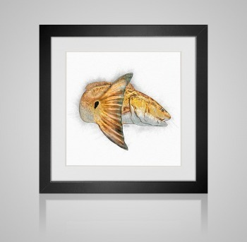 Redfish sketch in frame
