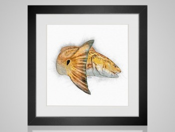 Redfish sketch in frame
