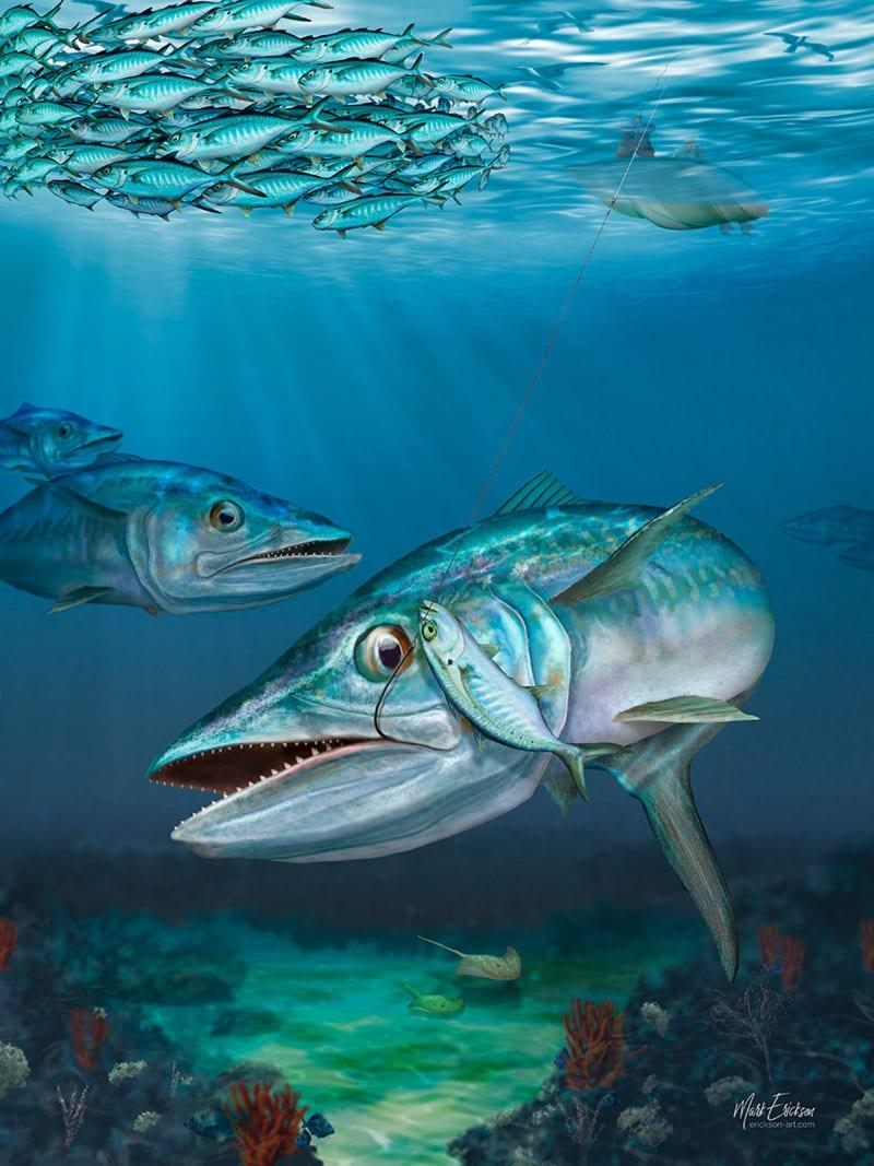 Kingfish art prints