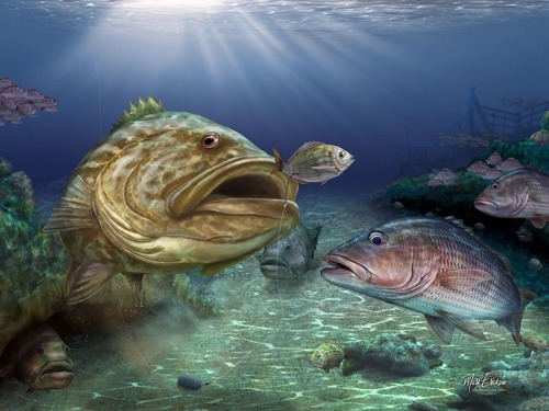 Grouper art prints