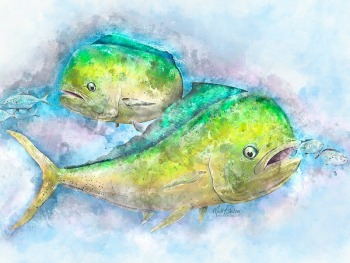 Mahi Mahi art print gift for mahi fisherman
