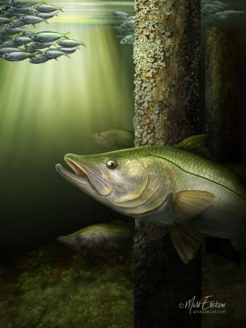 Snook fine art painting prints