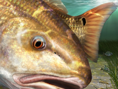 Redfish painting wall art print gift for fisherman