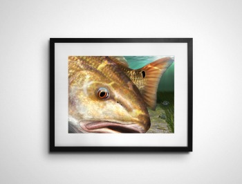 Redfish painting in a black matted frame