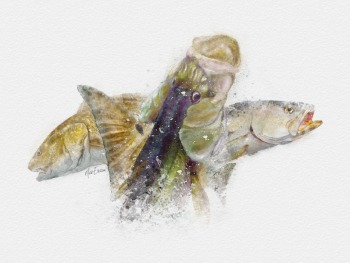 Inshore slam watercolor art print gift for florida fisherman