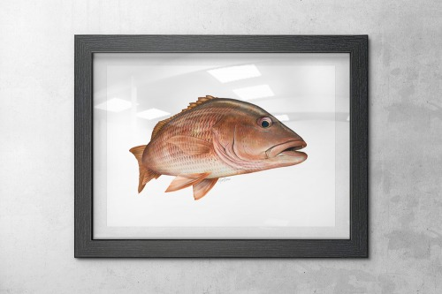 Framed mango snapper art print