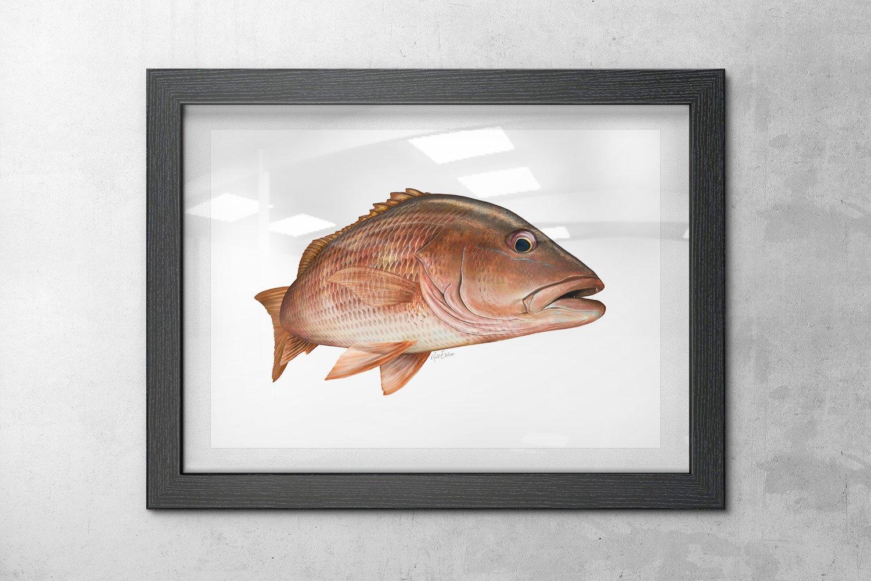 Framed mango snapper art print