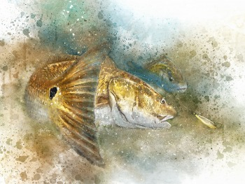 Louisiana Redfish watercolor art print