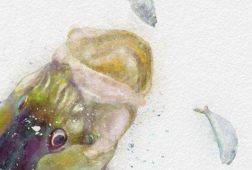 Snook watercolor enlarged