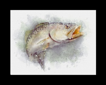 Speckle trout art print for fisherman gift