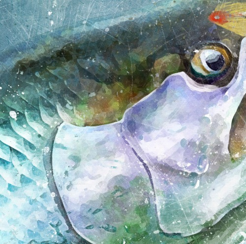 Fly fishing for tarpon watercolor art print