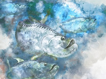 Tarpon fisherman gift art school watercolor print