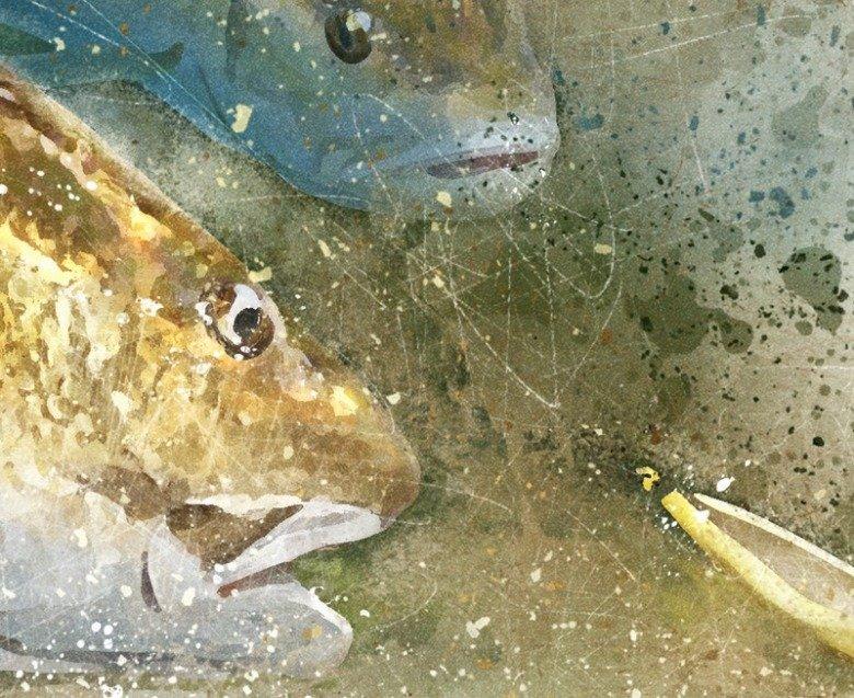 Louisiana Redfish watercolor art closeup