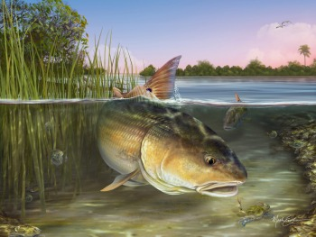 Redfish art print gift for fisherman